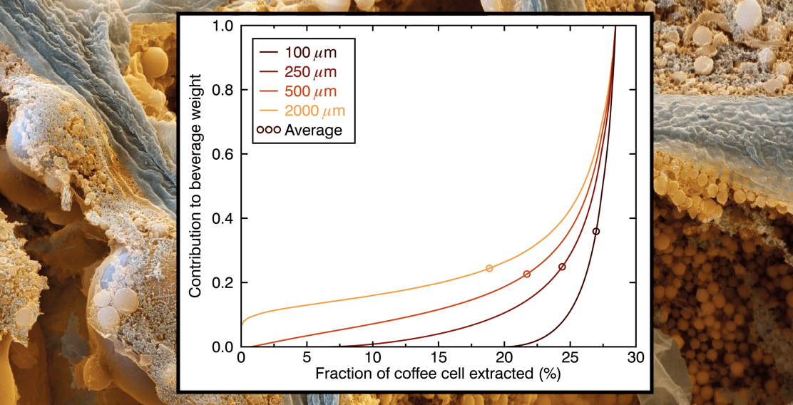 The Dynamics of Coffee Extraction